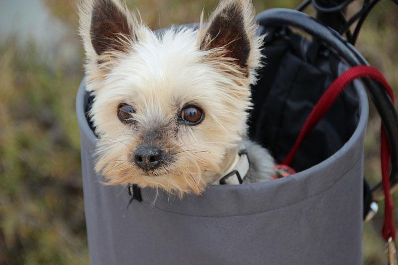 Um lange Distanzen zu überbrücken lohnt sich der Kauf eines Hundeanhängers