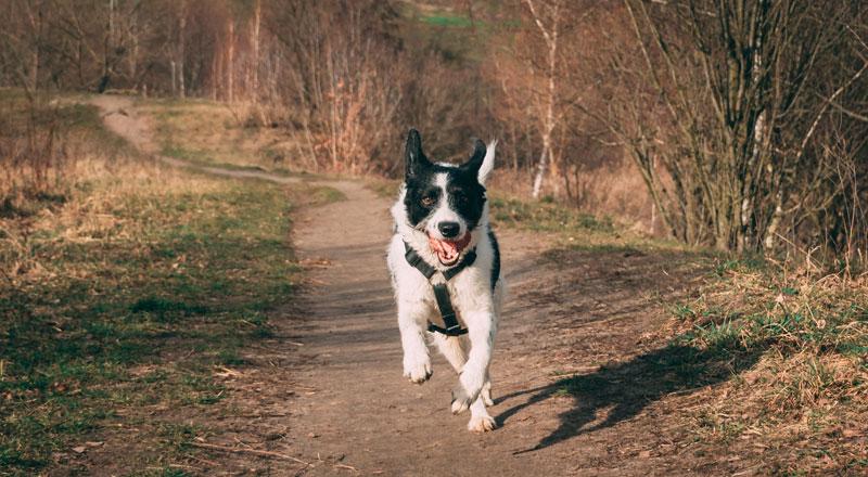 Vielen Hunden mangelt es an Disziplin